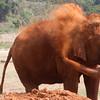 time for a dirt bath!