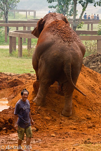 pumbaa and her mahout