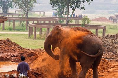 dirt bath time