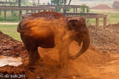 dirt bath time for pumbaa