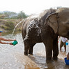 this is how to bathe an elephant