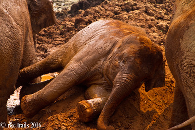 baby navaan in the dirt