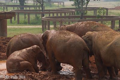 navaan family during mud bath time