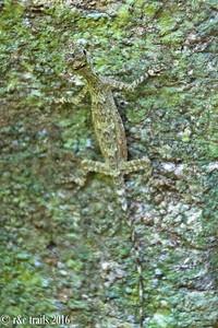 camoflauged lizard