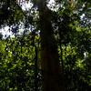 nature walk thru ko lanta national park