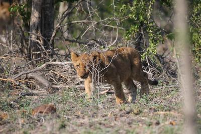 Kruger 2016