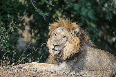 Kruger 2015