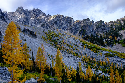 Larch grove up Aasgard