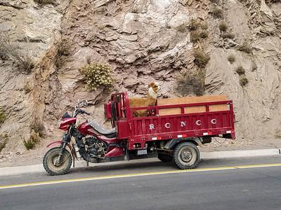 Llama transport