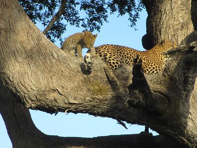 Travel Africa 2014