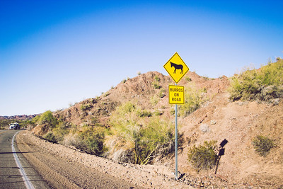 Burros on road sign, Lake Havasu City, Arizona