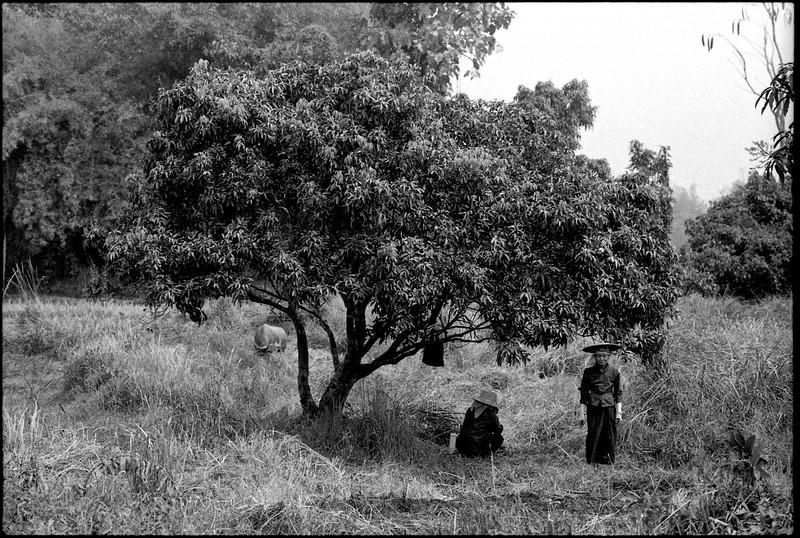 Changmai 1985