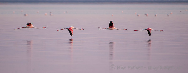 Flamingo Mission