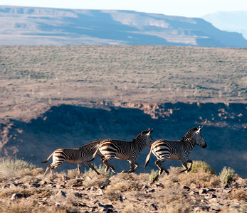 Zebras above the FIsh River