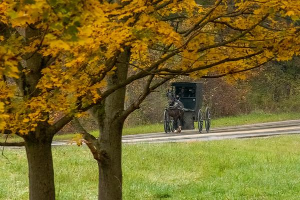 Amish Carrigage Ride