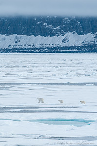 Mother & Cubs out on the ice