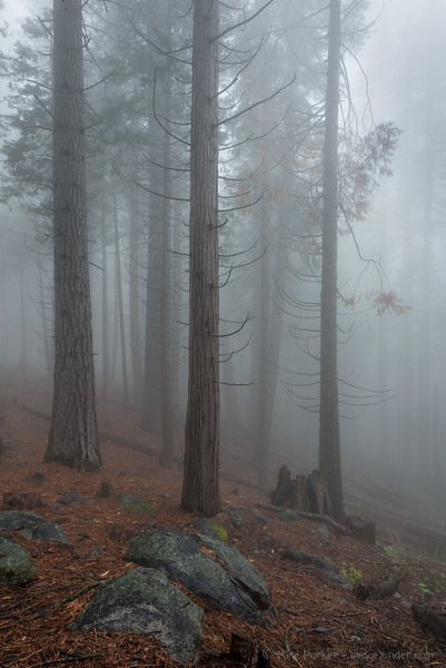 Forest atmosphere