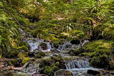 Waterfall - Hoh River Trail