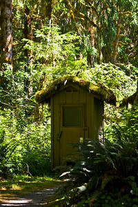 Hoh Rainforest outhouse - see the tree growing out of the moss on the roof?