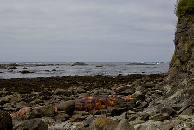 Another photo of the dead humpback whale.