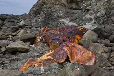 Dead humpback whale.