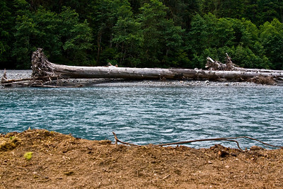 Hoh River with giant driftwood.