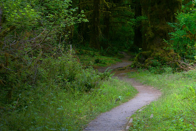 Entrance of Hoh River Trail into the forest.