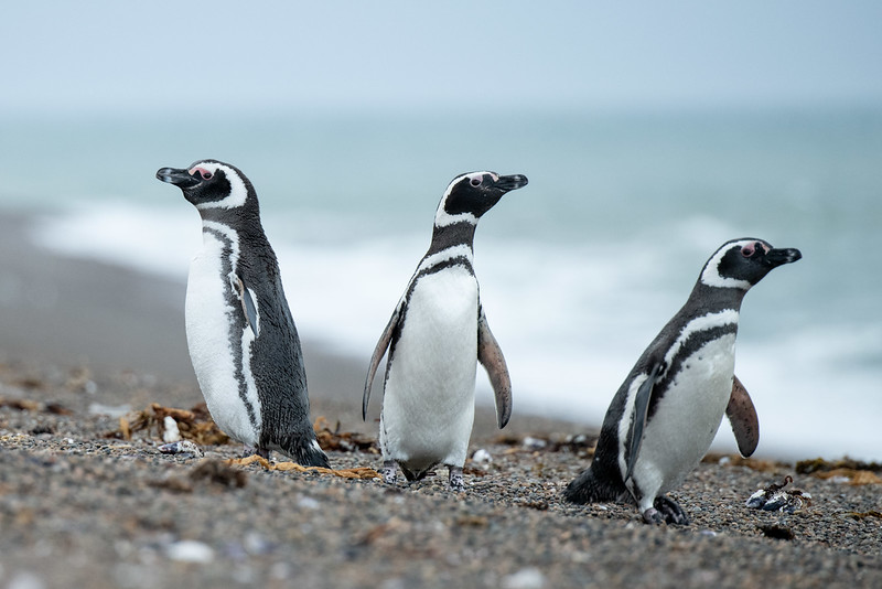 3 sides of a Penguin