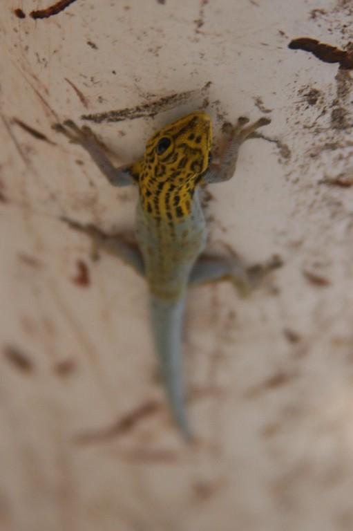 hand painted lizard