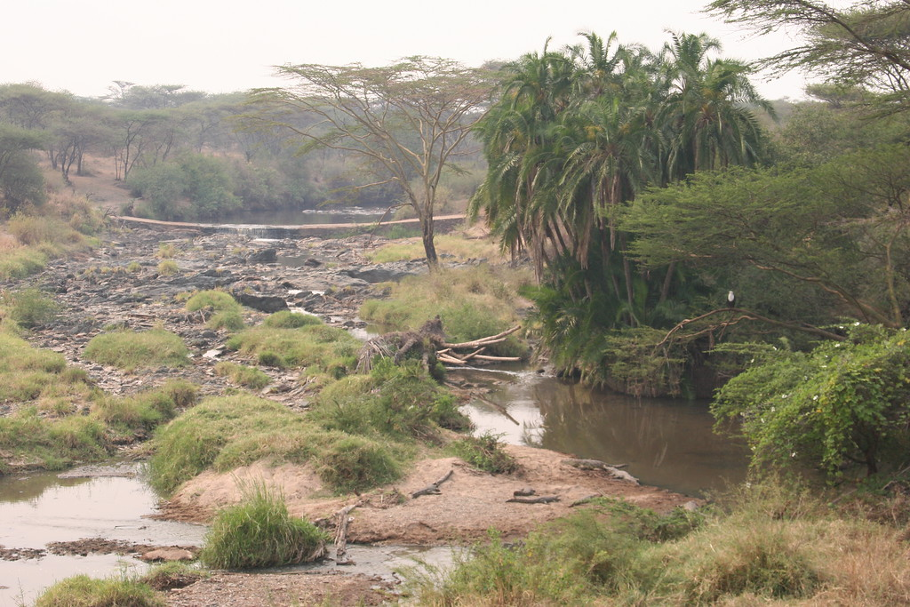 landscape - fish eagle, crocodiles, hippo & kingfisher!!