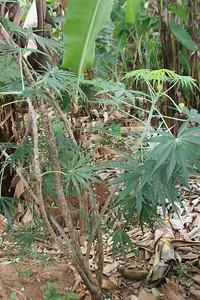 iodine plant