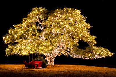 Christmas Tree - Texas Style