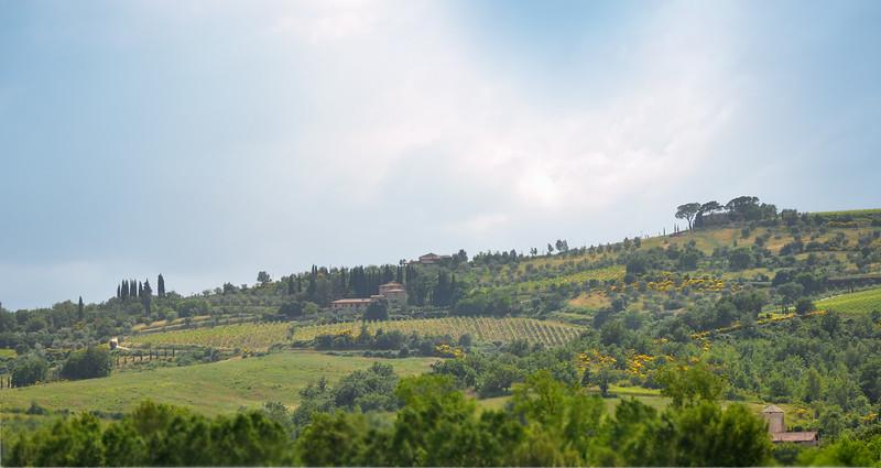 Tuscan Hillside Near Radda In Chianti