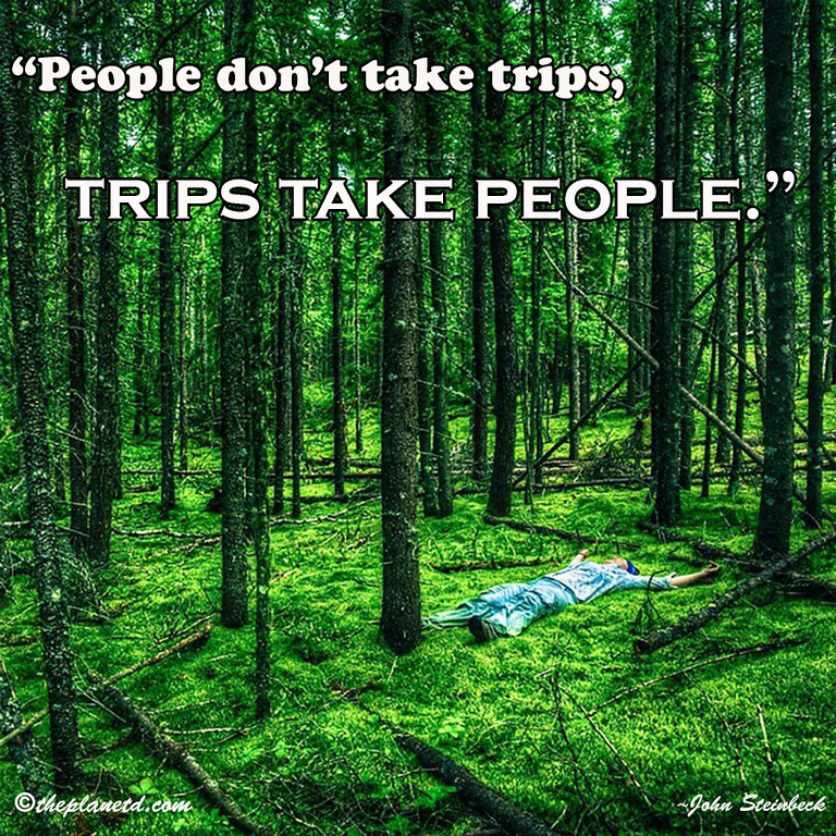 best travel quotes forest