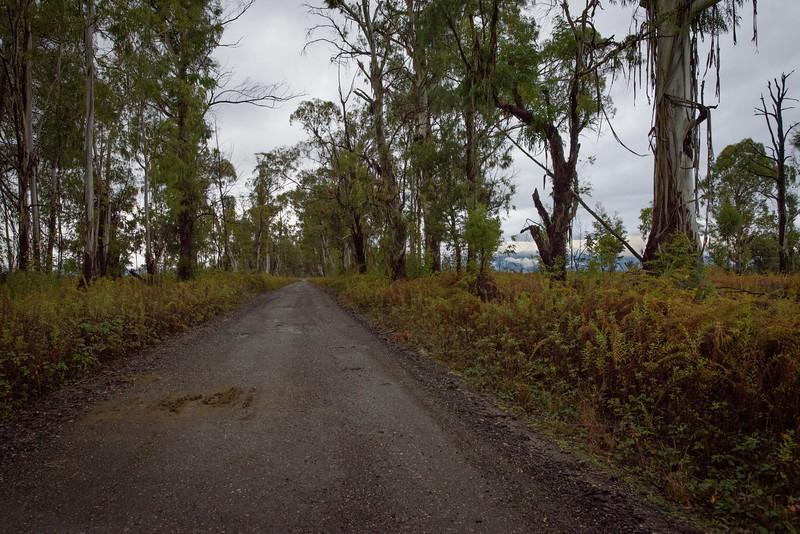 Abkhazian jungle