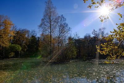 City centre pond