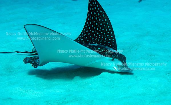 Little Cayman Beach Resort, Reef Divers