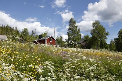 Flowering meadow in spring