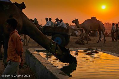 Pushkar 963_8563.DXO