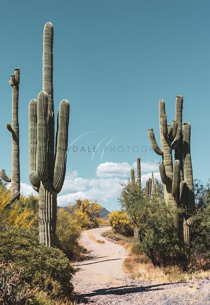 Arizona I
