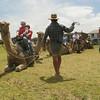 Port Fairy ... camel rides