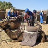 Our guides and camel handlers for the trip are Berber tribesmen from the nearby village. The ample padding on the camel saddles made the ride very comfortable.