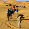 The guides walk their camel groups -- regulating the pace and navigation. Just seeing the COLOR and contrasts begin to blow this photographer away !