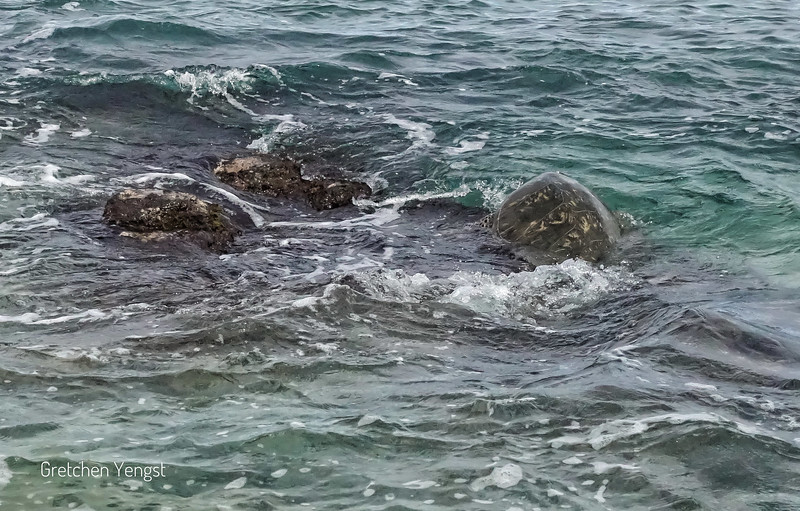 See big turtle on the right. It is hard to distiguish it from the protruding rock