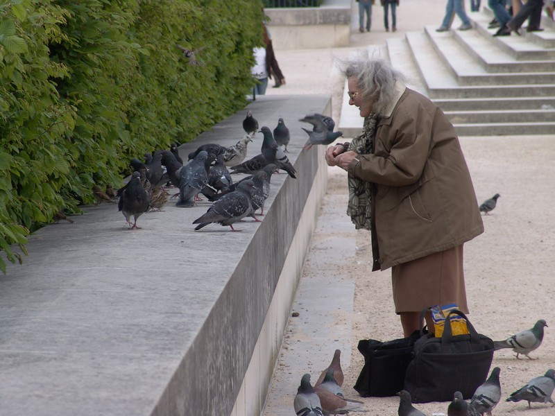 NDex3: One of the pleasures of going to the parks around the cathedral, is feeding the birds that gather.