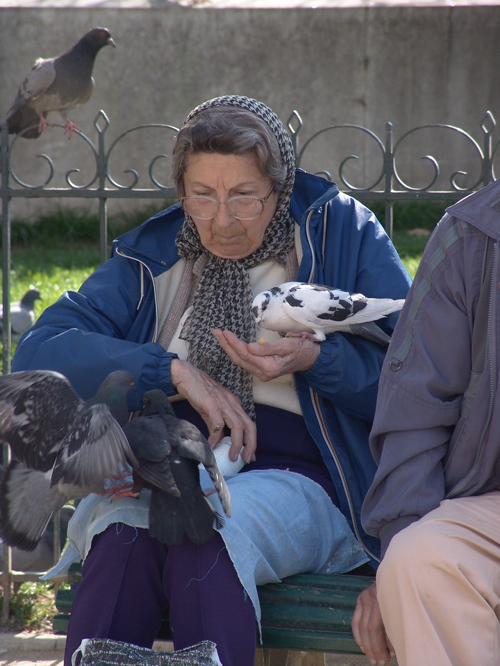 NDex4: This lady seemed to have her special and favored bird eating from her hand....because she is swishing the other birds away.