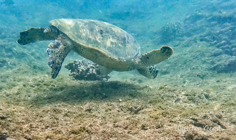 They are not skittish of humans like Caribbean turtles I photograph