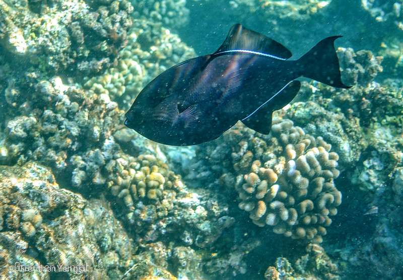 This photo has more light on this larger 18 in. one ....so easier to make out his features as a trigger fish