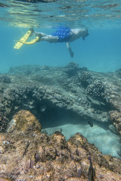 The bottom of the bay has old lava and coral that makes a great sea-life habitat