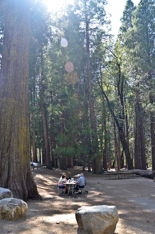 Picnic area at Sentinel Beach....towering trees.